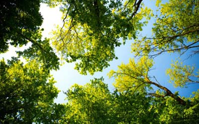 Celebrate trees this Arbor Day, April 30