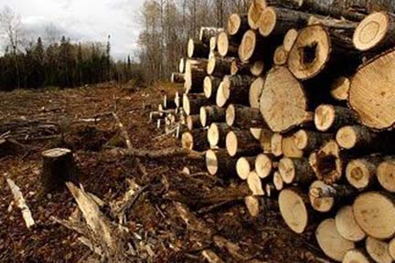 DNR, DTE Energy agreement on nation's carbon-credits project